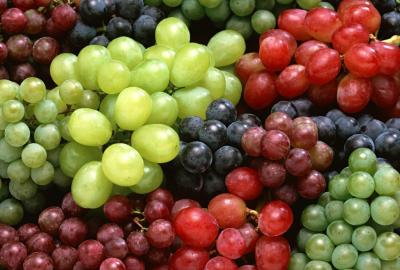 Ekologiczne metody uprawy winorośli