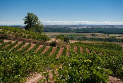 Regiony najlepszych win. Burgundia