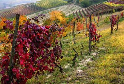 Włoska kuchnia i wino